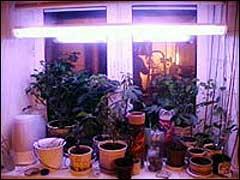 Подсветка для цветов в квартире купить